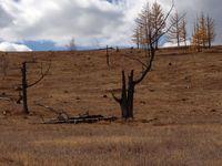 Хууль бусаар мод, бургас тайрч байна гэсэн мэдээлэл ташаа болохыг НБОГ-аас мэдэгдлэ