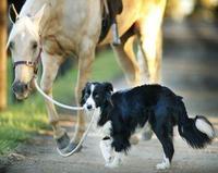Морь болон нохой тань байгаа газраасаа дайжаад байвал ирсэн замаараа түргэн буцаарай